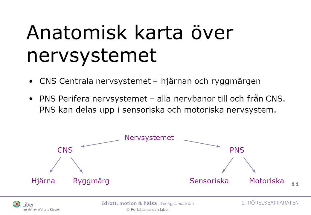 Anatomisk karta över nervsystemet
