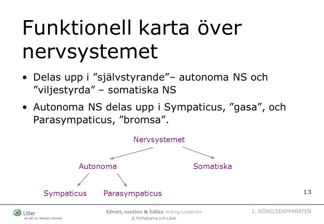 Funktionell karta över nervsystemet