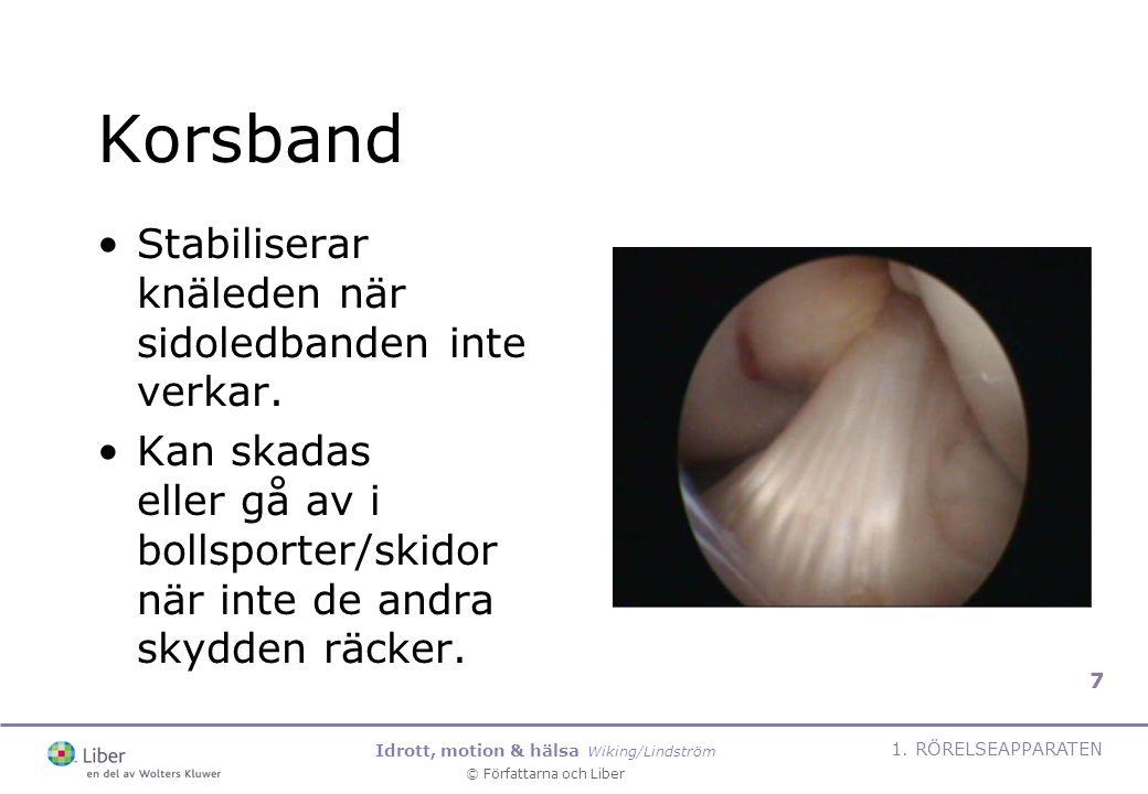 Korsband Stabiliserar knäleden när sidoledbanden inte verkar.