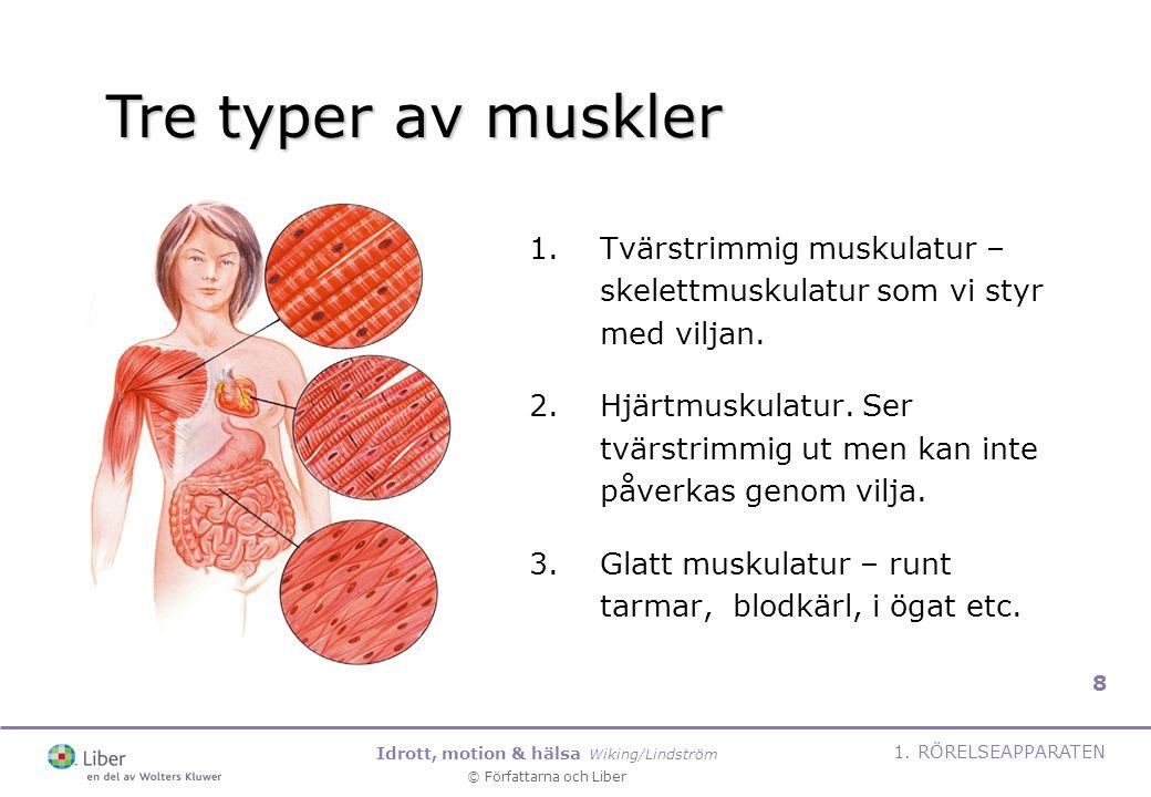 Tre typer av muskler Tvärstrimmig muskulatur – skelettmuskulatur som vi styr med viljan.