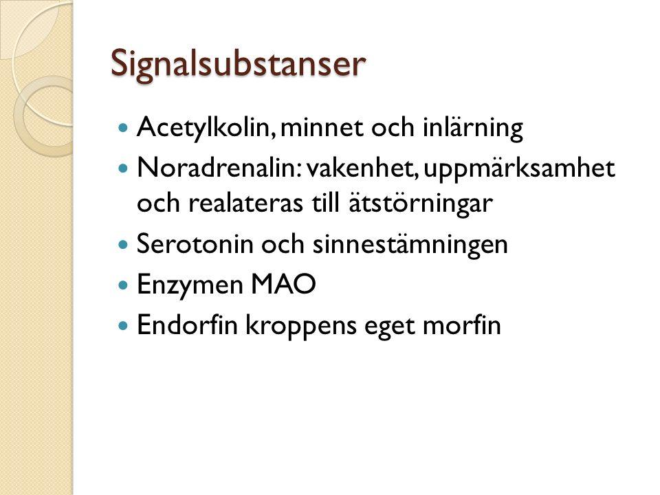 Signalsubstanser Acetylkolin, minnet och inlärning