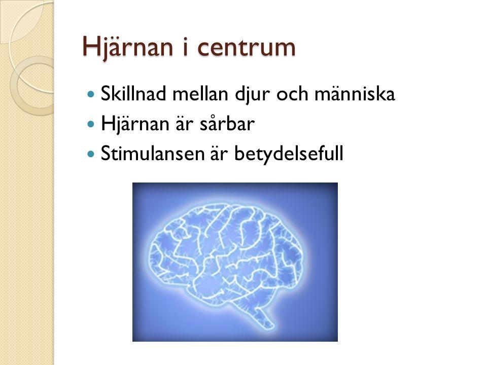 Hjärnan i centrum Skillnad mellan djur och människa Hjärnan är sårbar