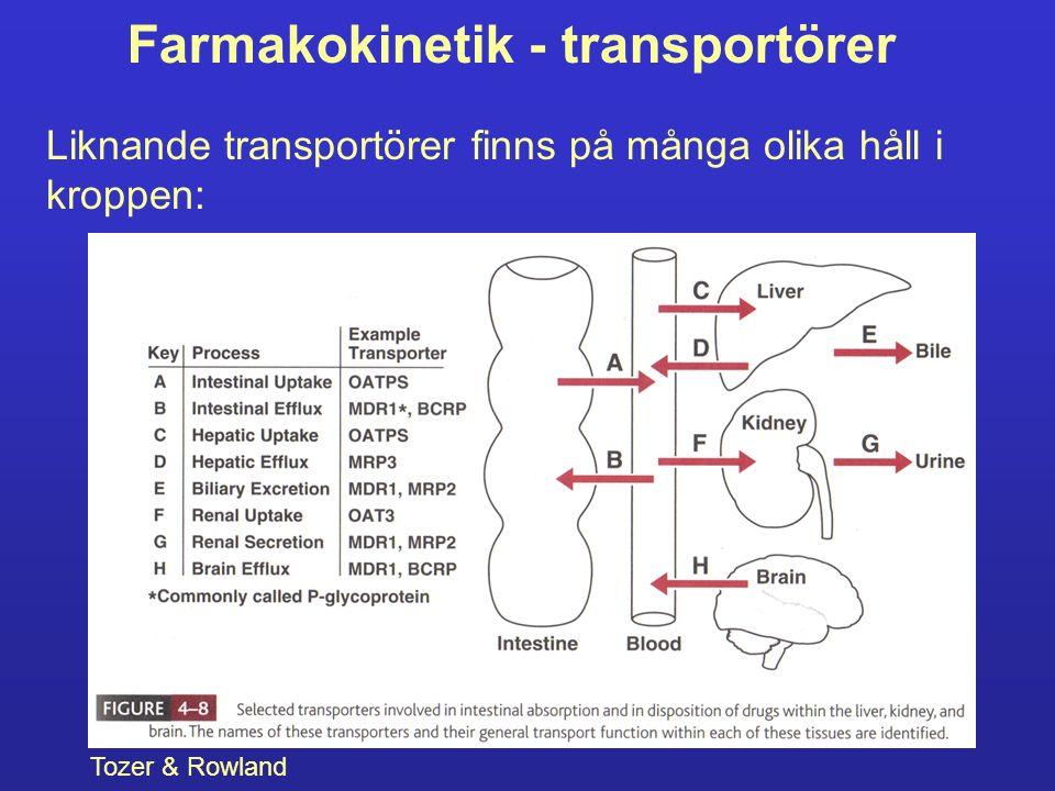 Farmakokinetik - transportörer