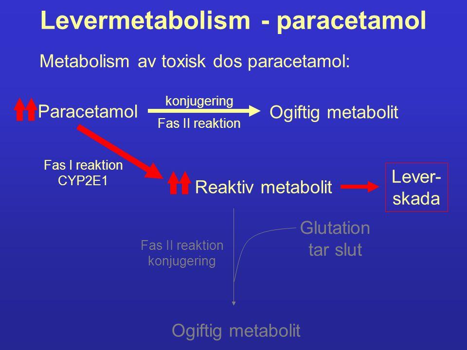 Levermetabolism - paracetamol