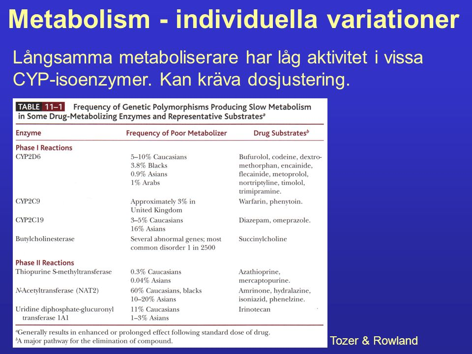 Metabolism - individuella variationer
