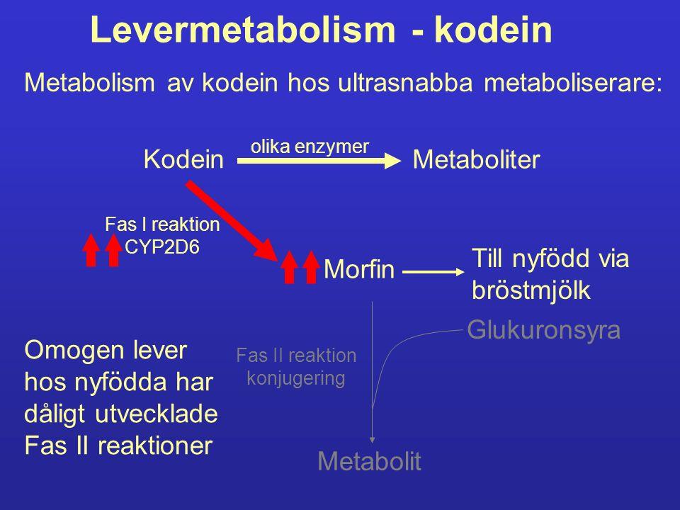 Levermetabolism - kodein