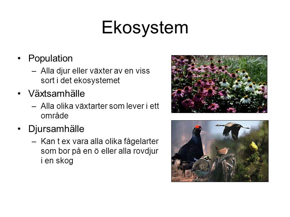 Ekosystem Population Växtsamhälle Djursamhälle