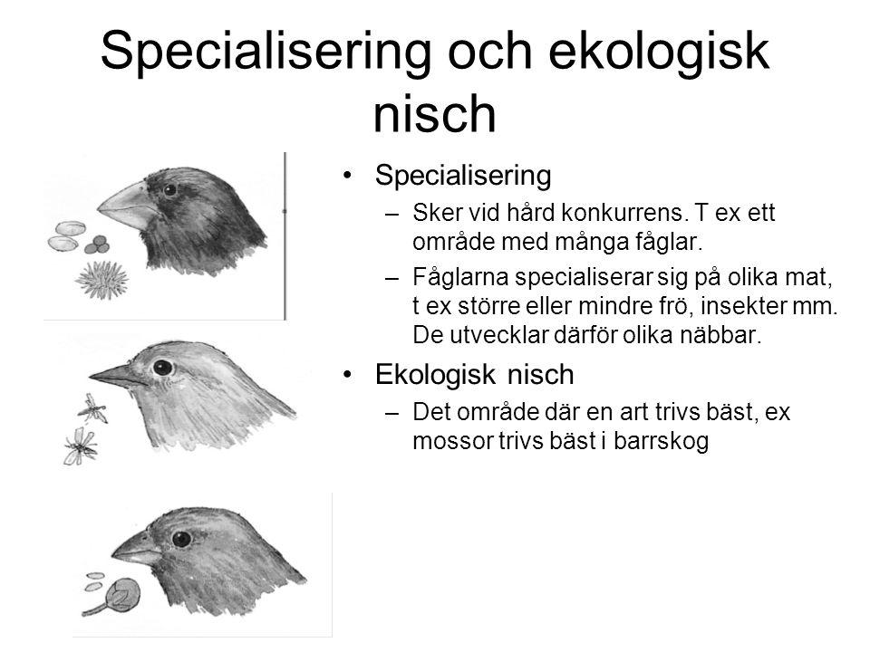 Specialisering och ekologisk nisch