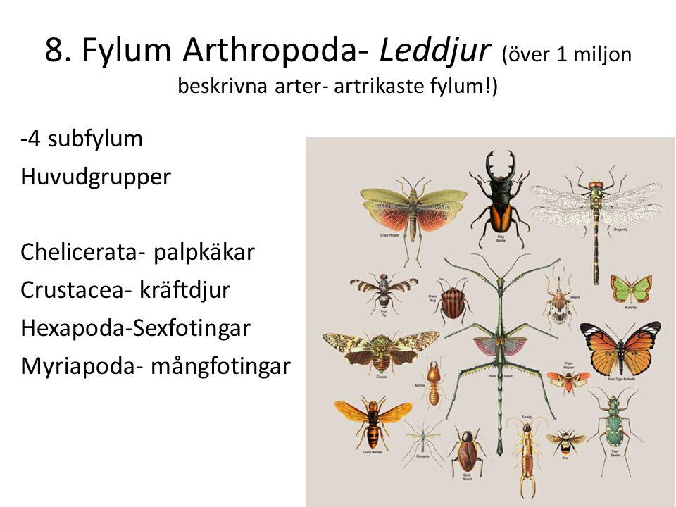 8. Fylum Arthropoda- Leddjur (över 1 miljon beskrivna arter- artrikaste fylum!)