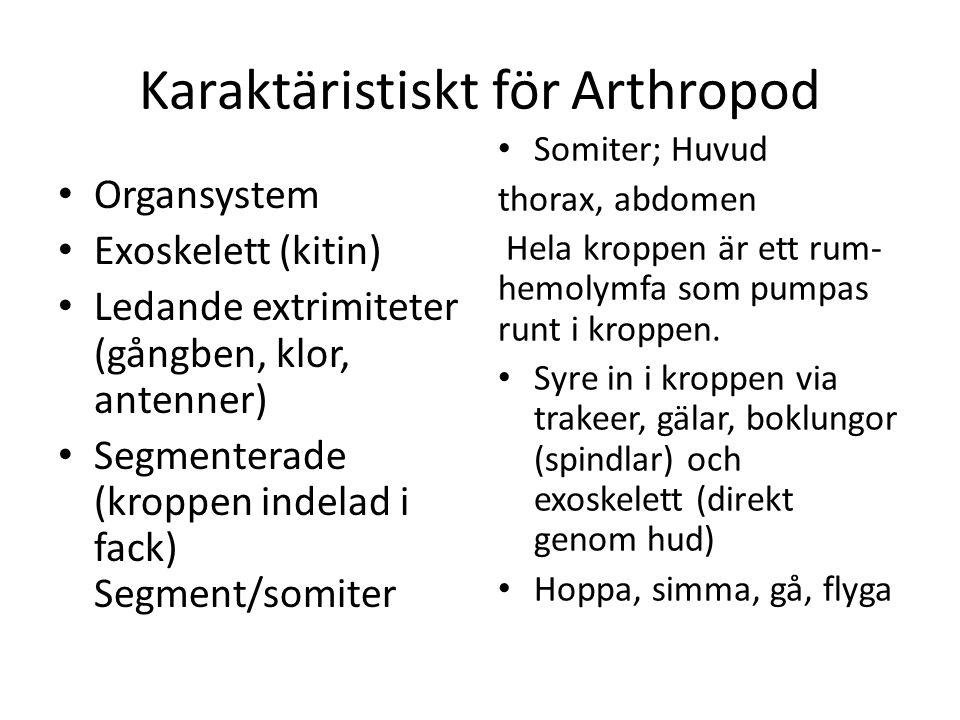 Karaktäristiskt för Arthropod