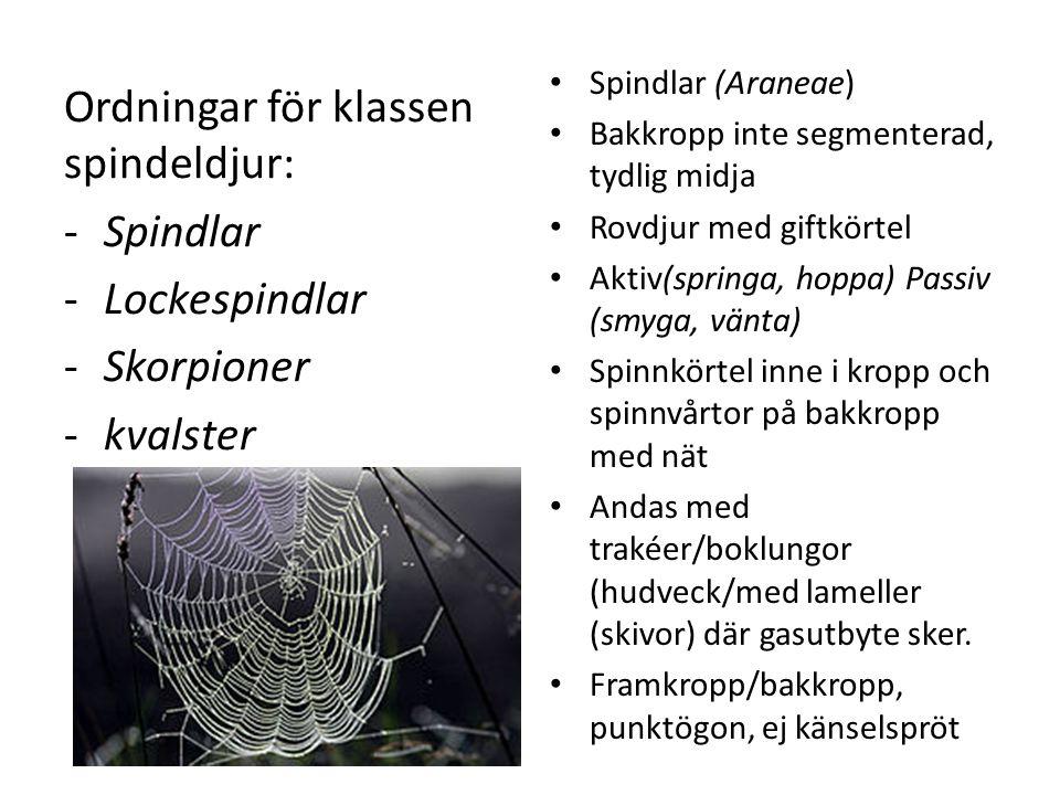 Ordningar för klassen spindeldjur: Spindlar Lockespindlar Skorpioner