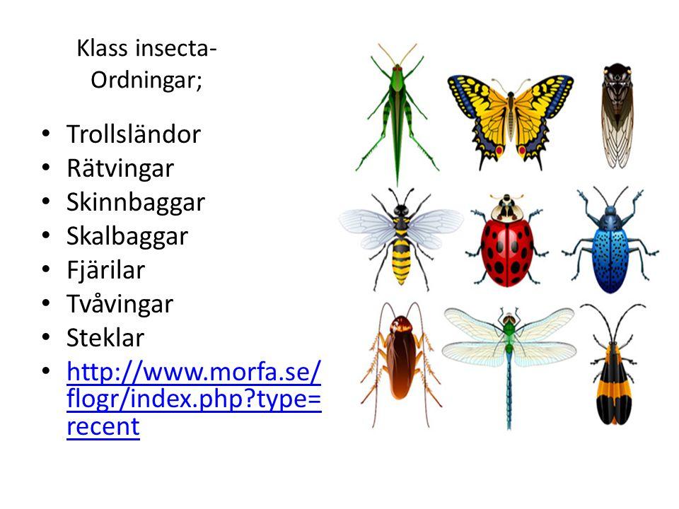 Klass insecta-Ordningar;