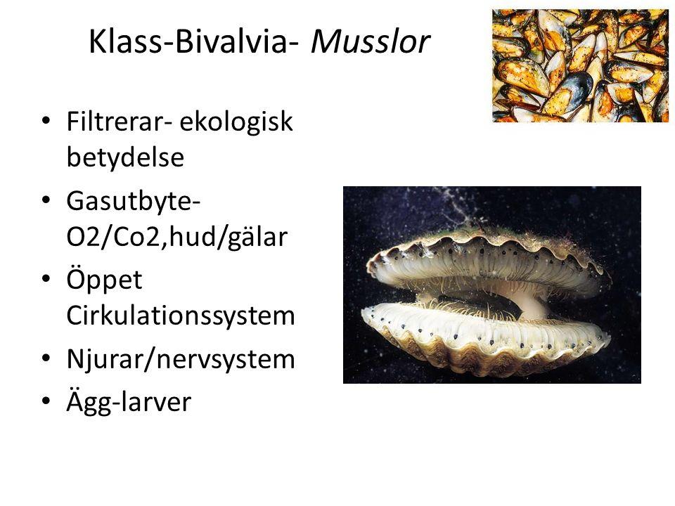 Klass-Bivalvia- Musslor