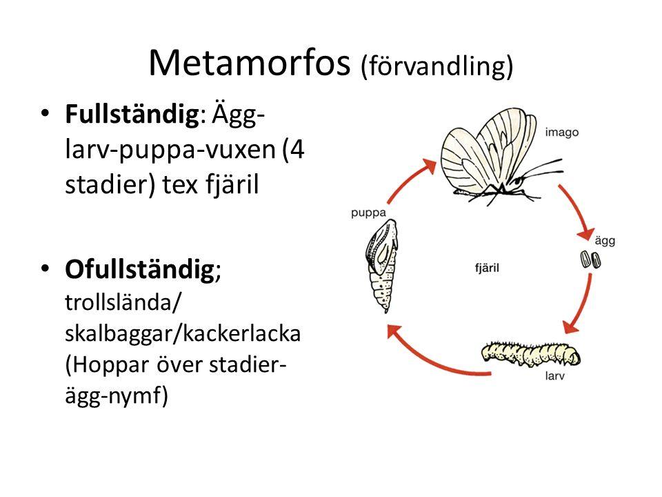 Metamorfos (förvandling)