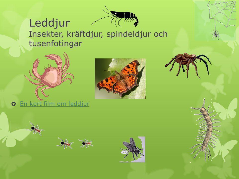 Leddjur Insekter, kräftdjur, spindeldjur och tusenfotingar