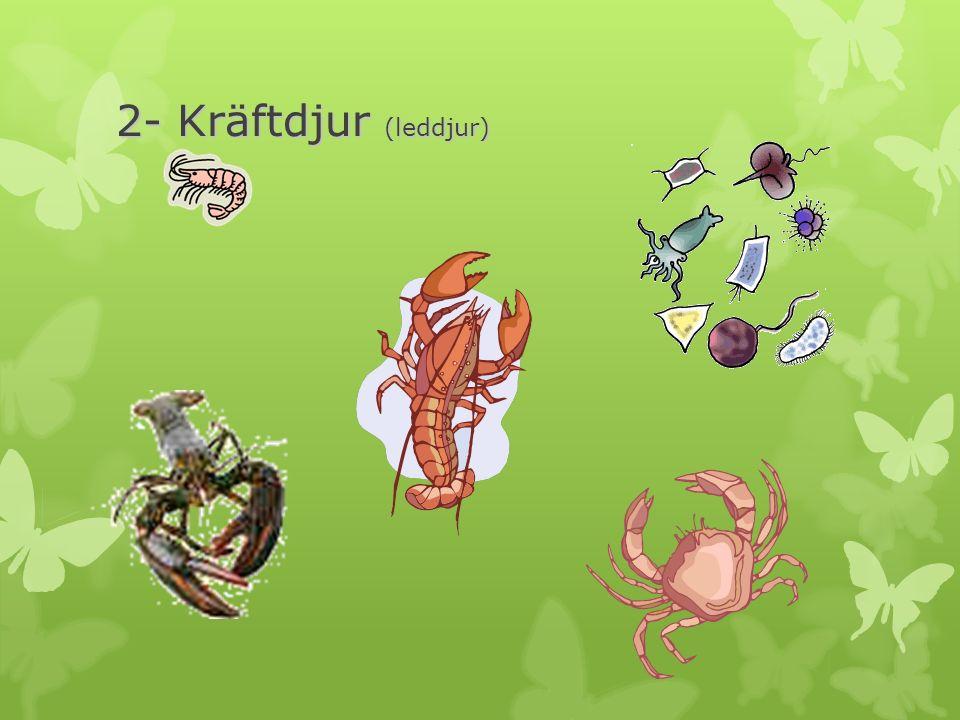 2- Kräftdjur (leddjur)