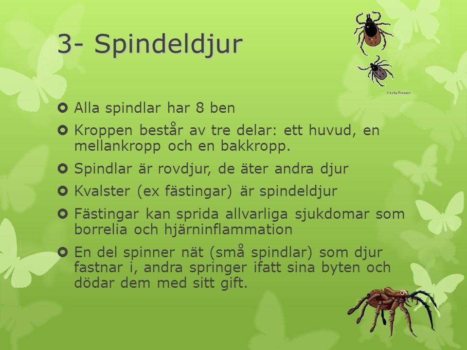 3- Spindeldjur Alla spindlar har 8 ben