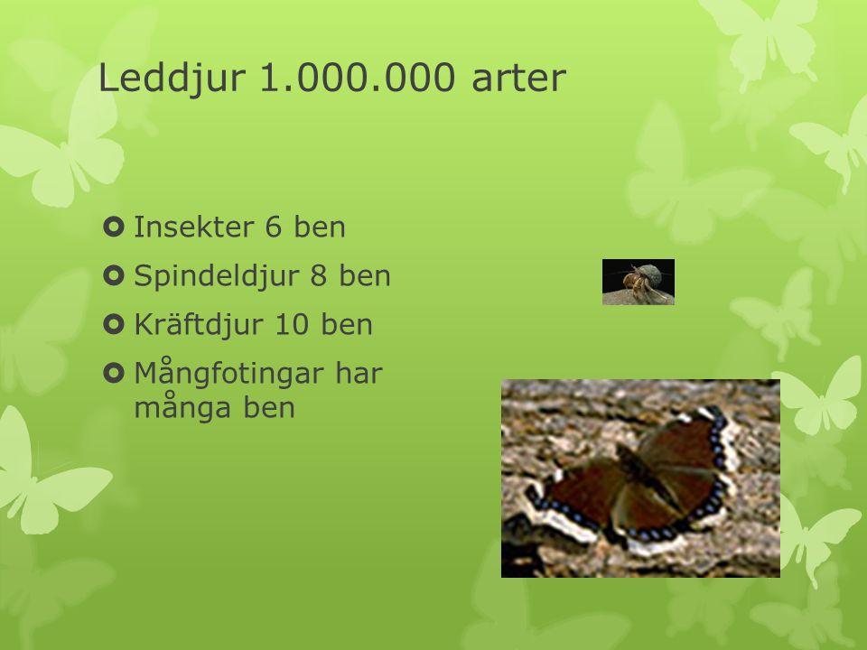 Leddjur 1.000.000 arter Insekter 6 ben Spindeldjur 8 ben