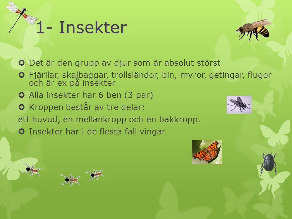 1- Insekter Det är den grupp av djur som är absolut störst