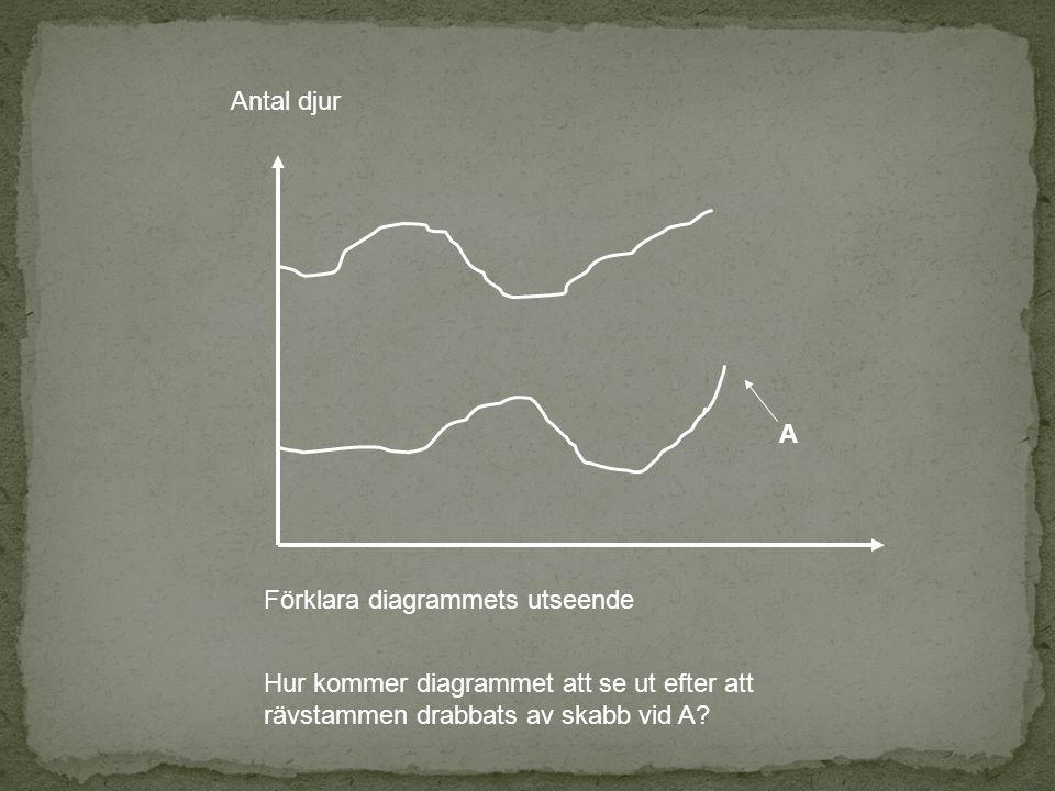 Antal djur A. Förklara diagrammets utseende.