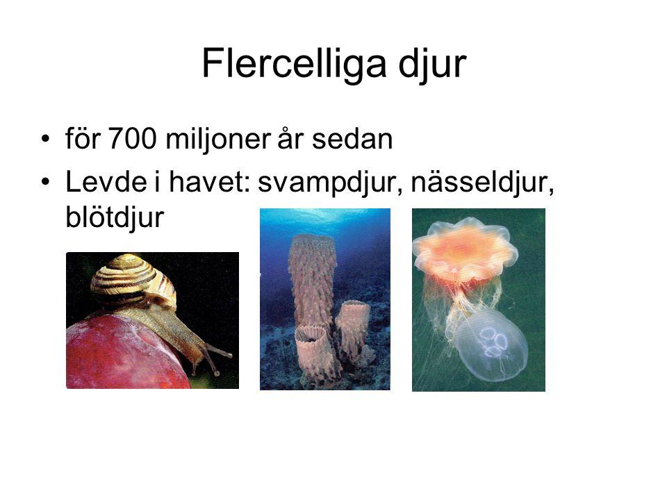 Flercelliga djur för 700 miljoner år sedan
