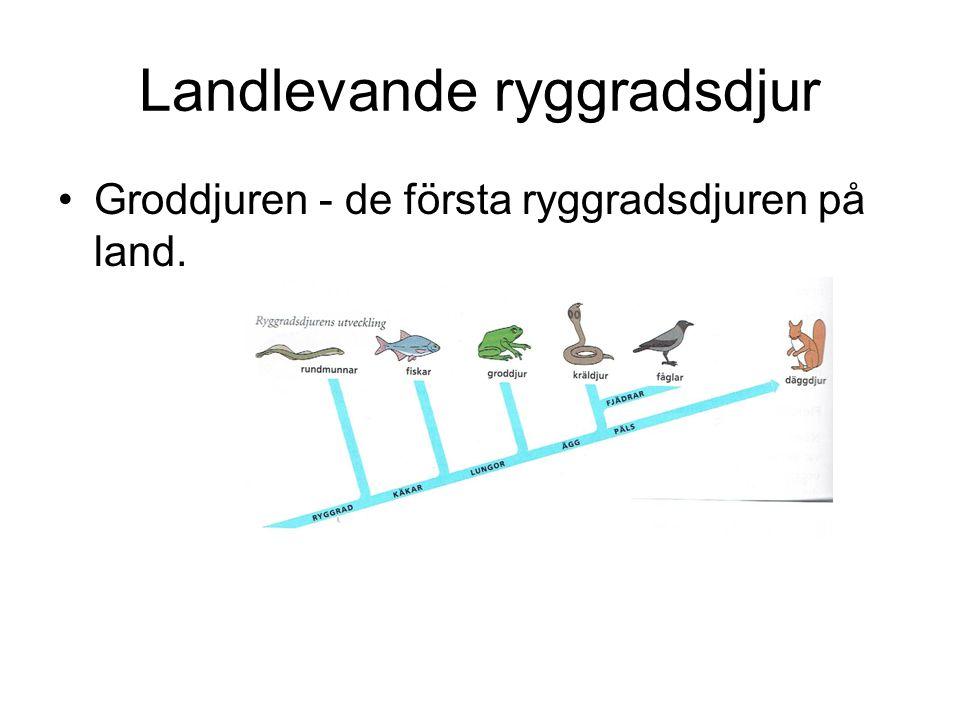 Landlevande ryggradsdjur