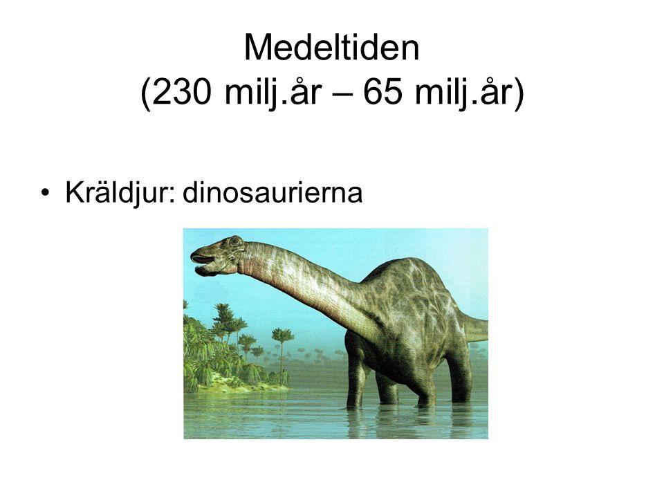 Medeltiden (230 milj.år – 65 milj.år)