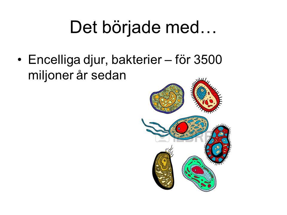 Det började med… Encelliga djur, bakterier – för 3500 miljoner år sedan