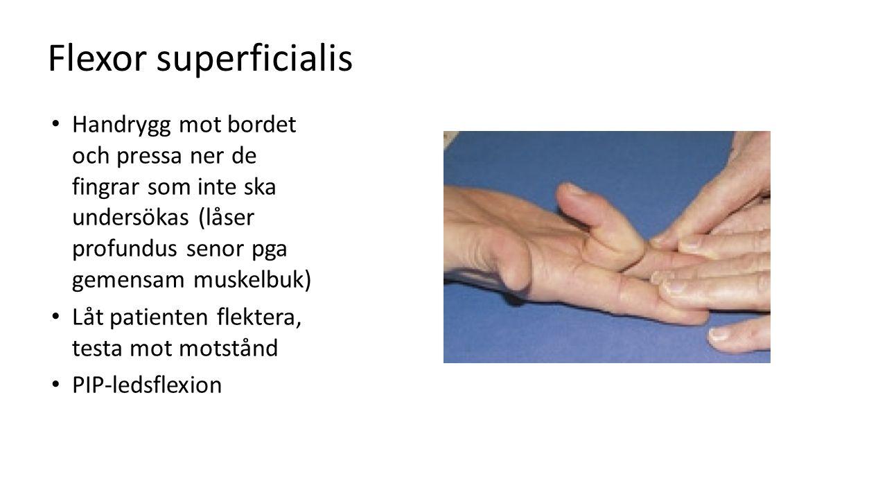 Flexor superficialis Handrygg mot bordet och pressa ner de fingrar som inte ska undersökas (låser profundus senor pga gemensam muskelbuk)