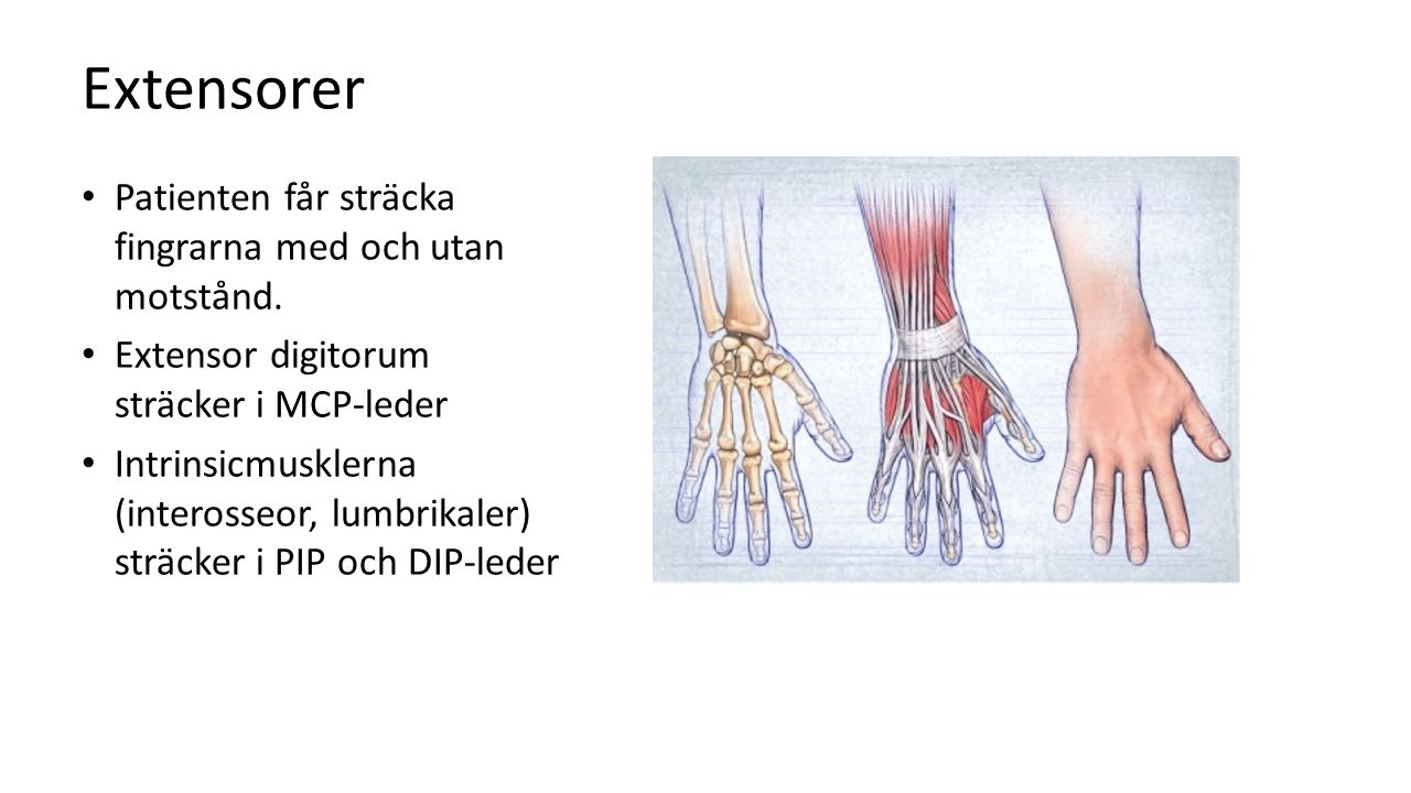 Extensorer Patienten får sträcka fingrarna med och utan motstånd.