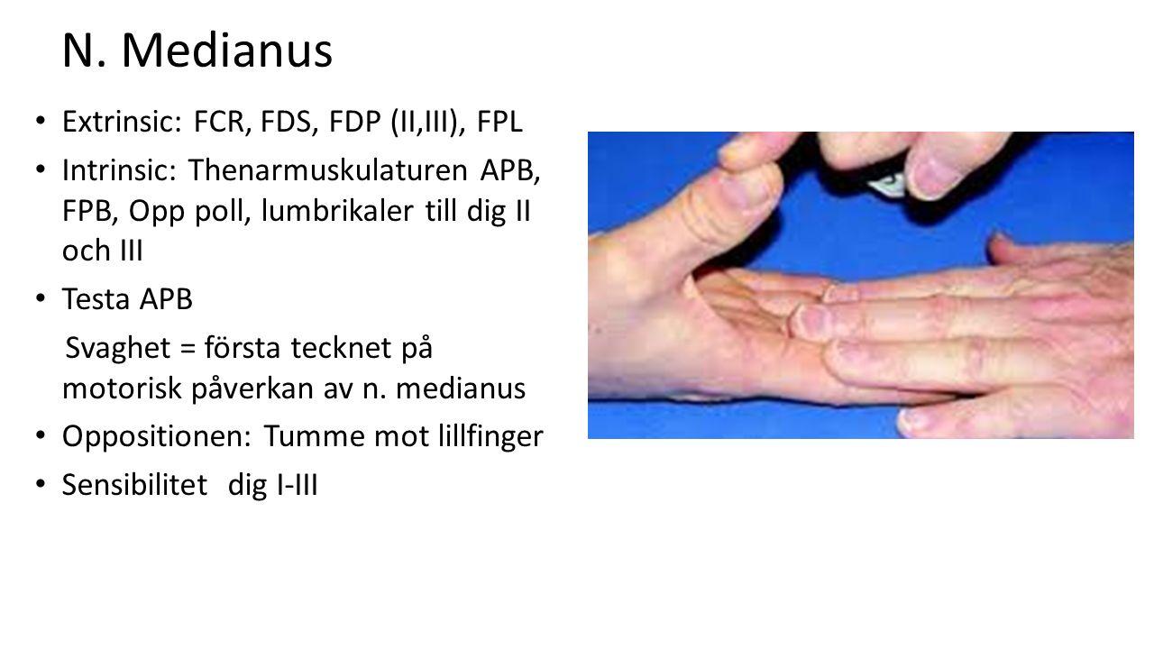 N. Medianus Extrinsic: FCR, FDS, FDP (II,III), FPL