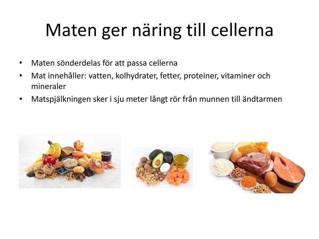 Maten ger näring till cellerna