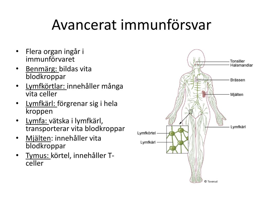 Avancerat immunförsvar
