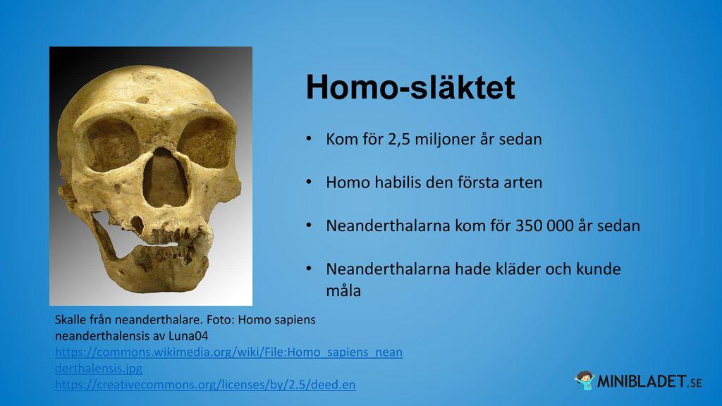 Homo-släktet Kom för 2,5 miljoner år sedan