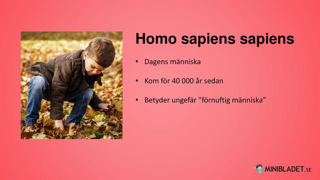 Homo sapiens sapiens Dagens människa Kom för 40 000 år sedan