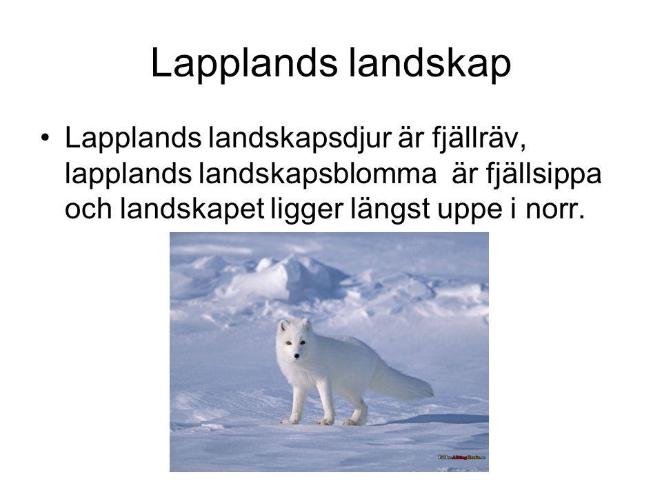 Lapplands landskap Lapplands landskapsdjur är fjällräv, lapplands landskapsblomma är fjällsippa och landskapet ligger längst uppe i norr.