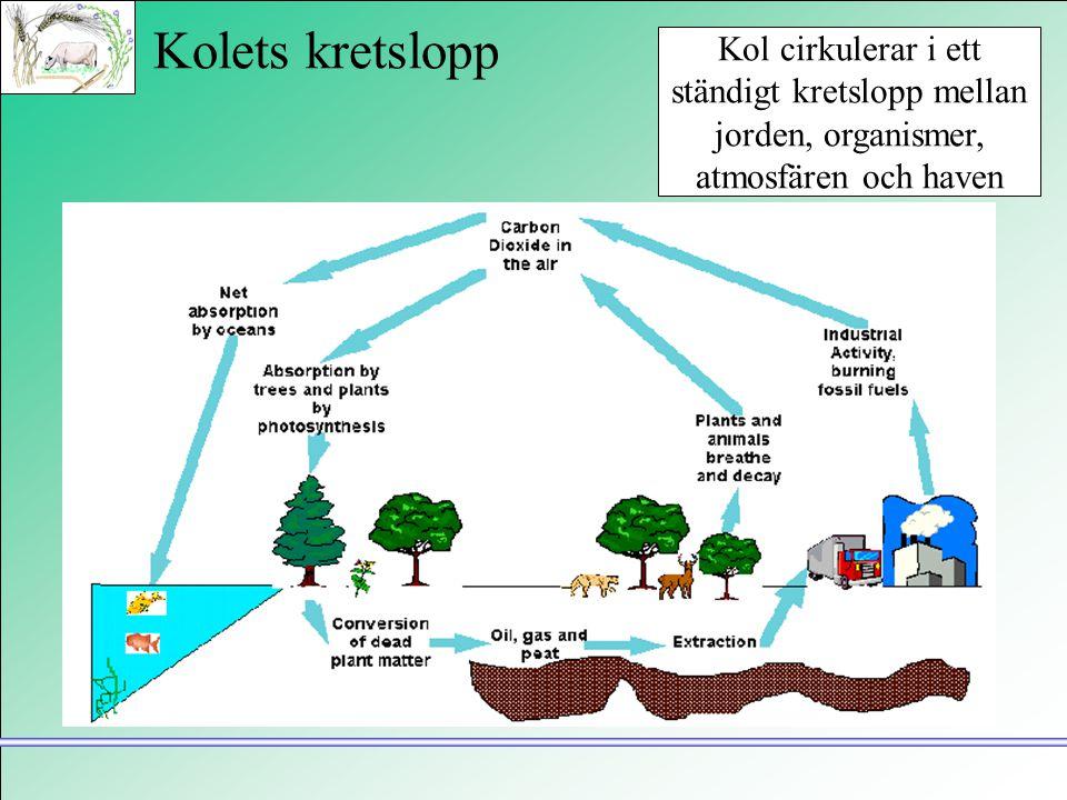 Kolets kretslopp Kol cirkulerar i ett ständigt kretslopp mellan jorden, organismer, atmosfären och haven.