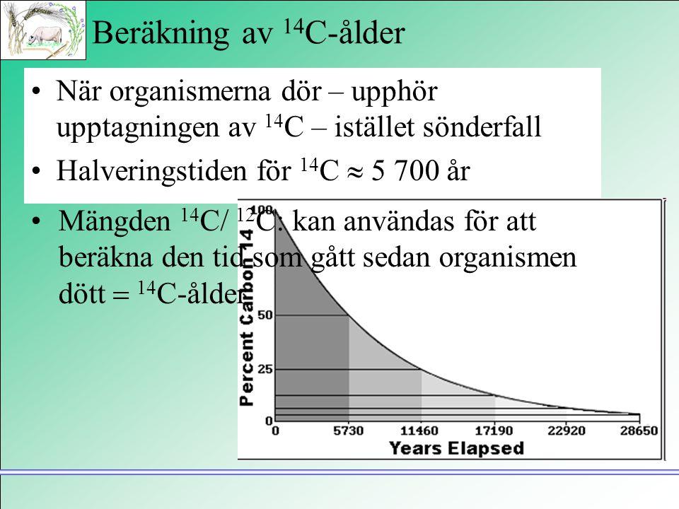 Beräkning av 14C-ålder När organismerna dör – upphör upptagningen av 14C – istället sönderfall. Halveringstiden för 14C  5 700 år.