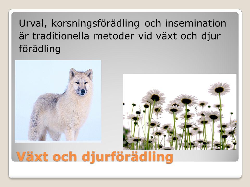Växt och djurförädling