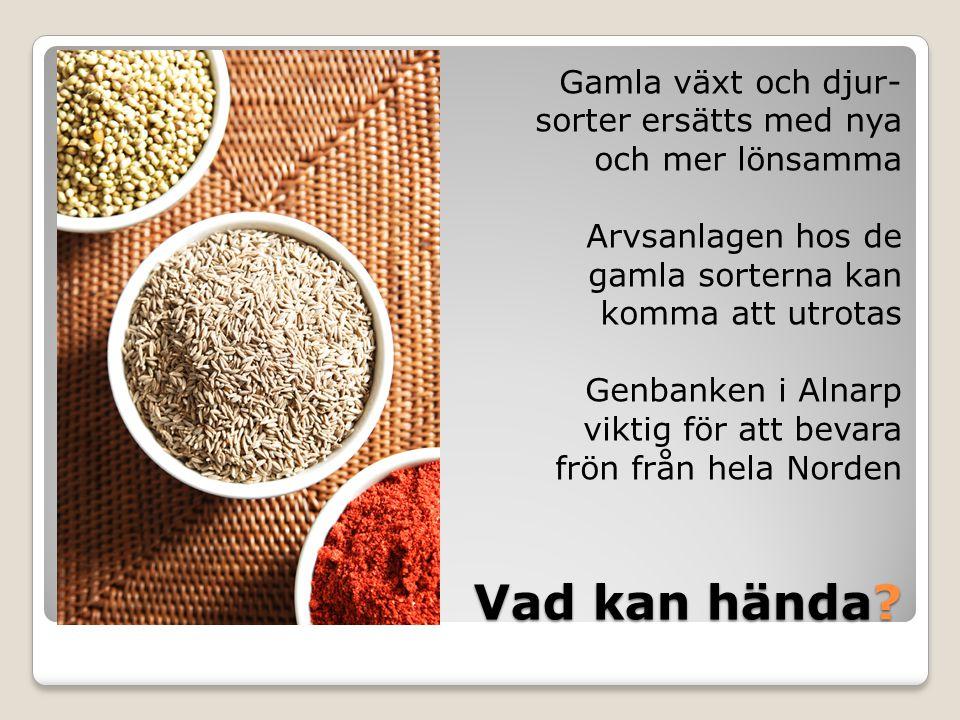 Gamla växt och djur- sorter ersätts med nya och mer lönsamma Arvsanlagen hos de gamla sorterna kan komma att utrotas Genbanken i Alnarp viktig för att bevara frön från hela Norden