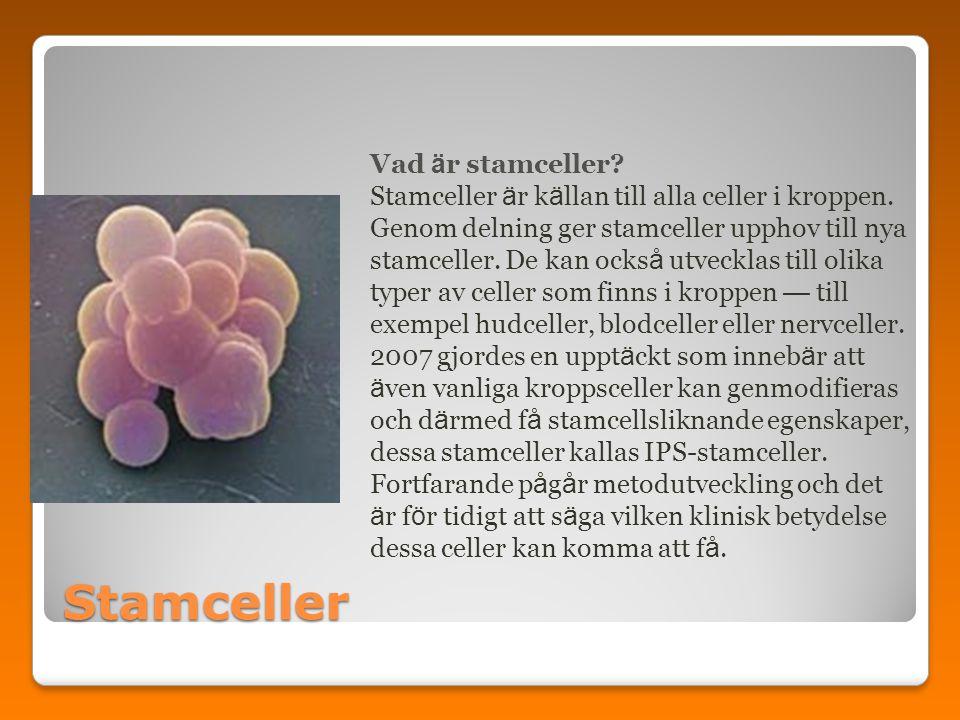 Stamceller Vad är stamceller