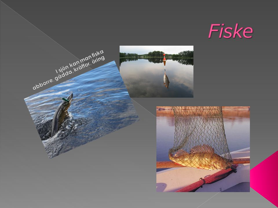 I sjön kan man fiska abborre, gädda, kräftor, öring.
