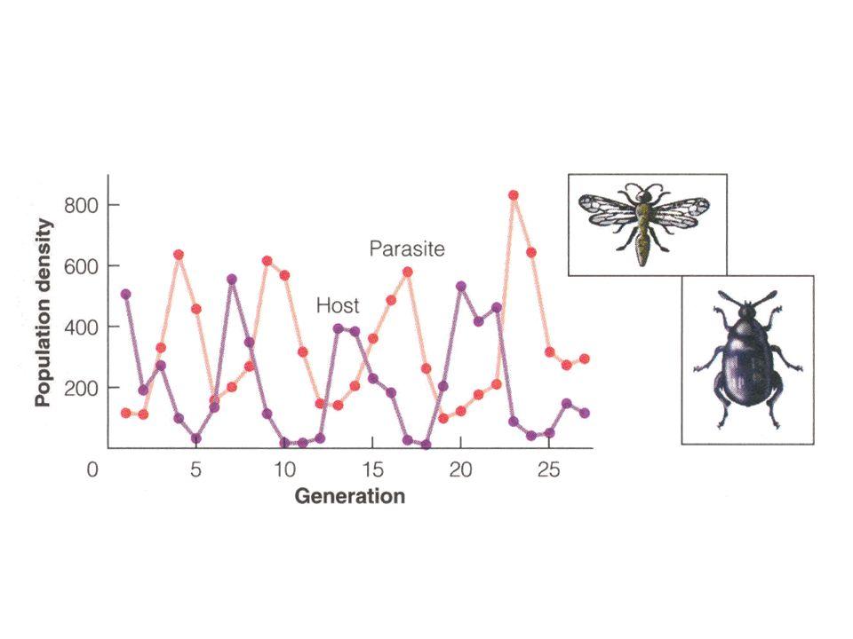 Fig 13.10, sid 215 Ännu ett exempel på oscillerande predator-prey-system i labmiljö.