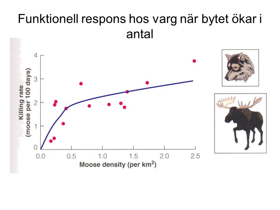 Funktionell respons hos varg när bytet ökar i antal