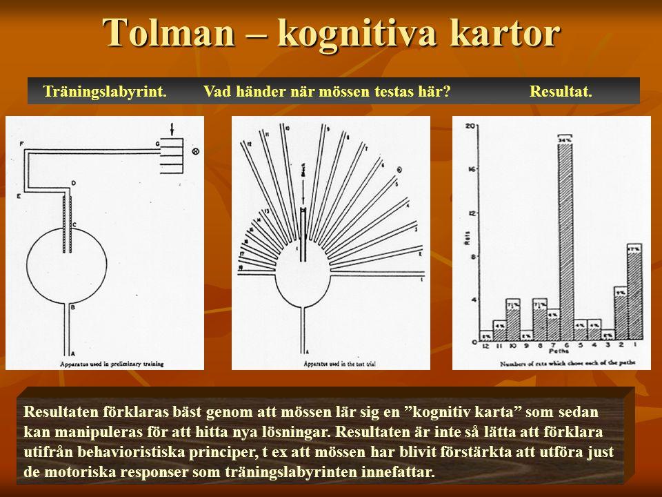 Tolman – kognitiva kartor