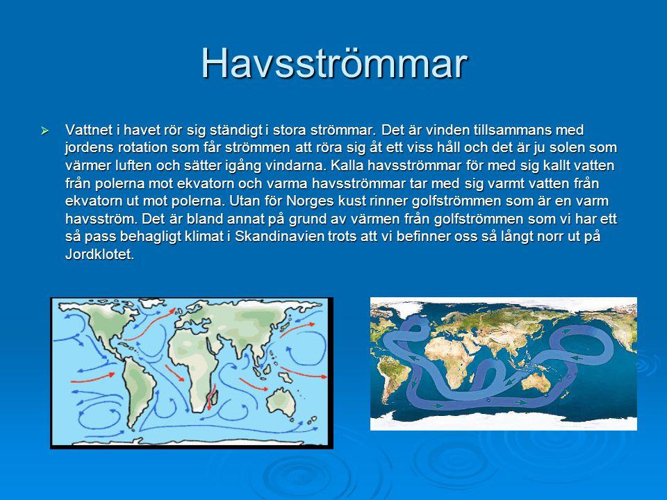 Havsströmmar