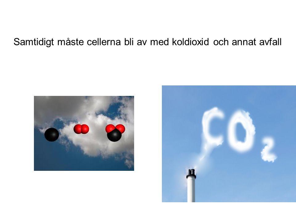 Samtidigt måste cellerna bli av med koldioxid och annat avfall