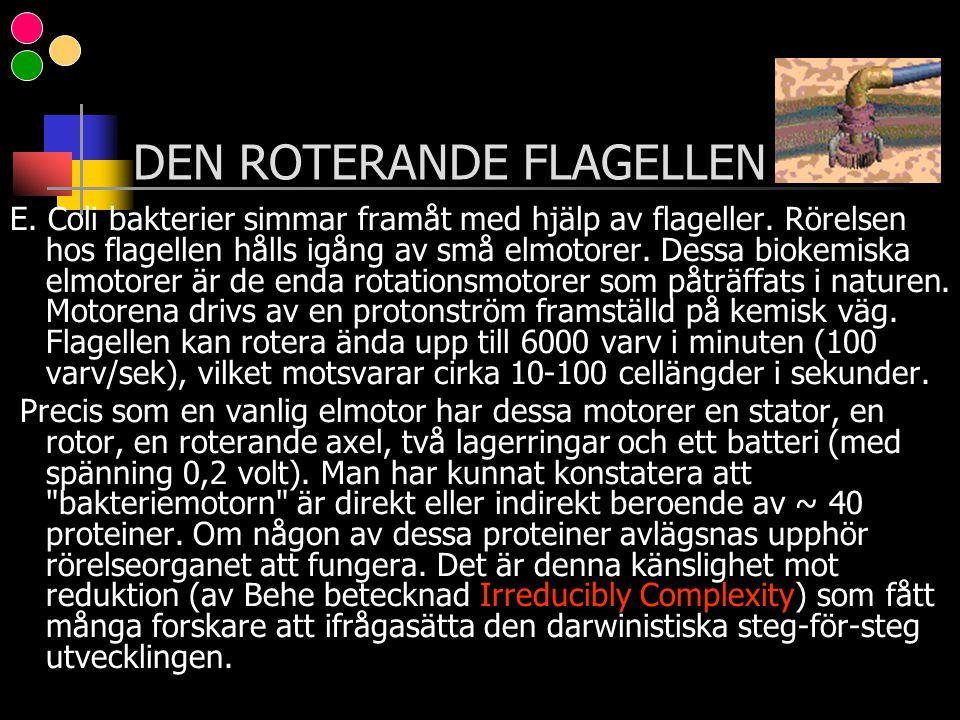 DEN ROTERANDE FLAGELLEN
