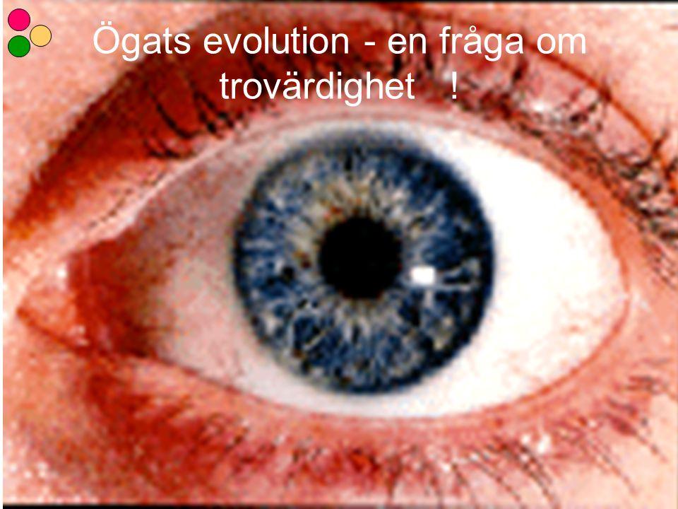 Ögats evolution - en fråga om trovärdighet !