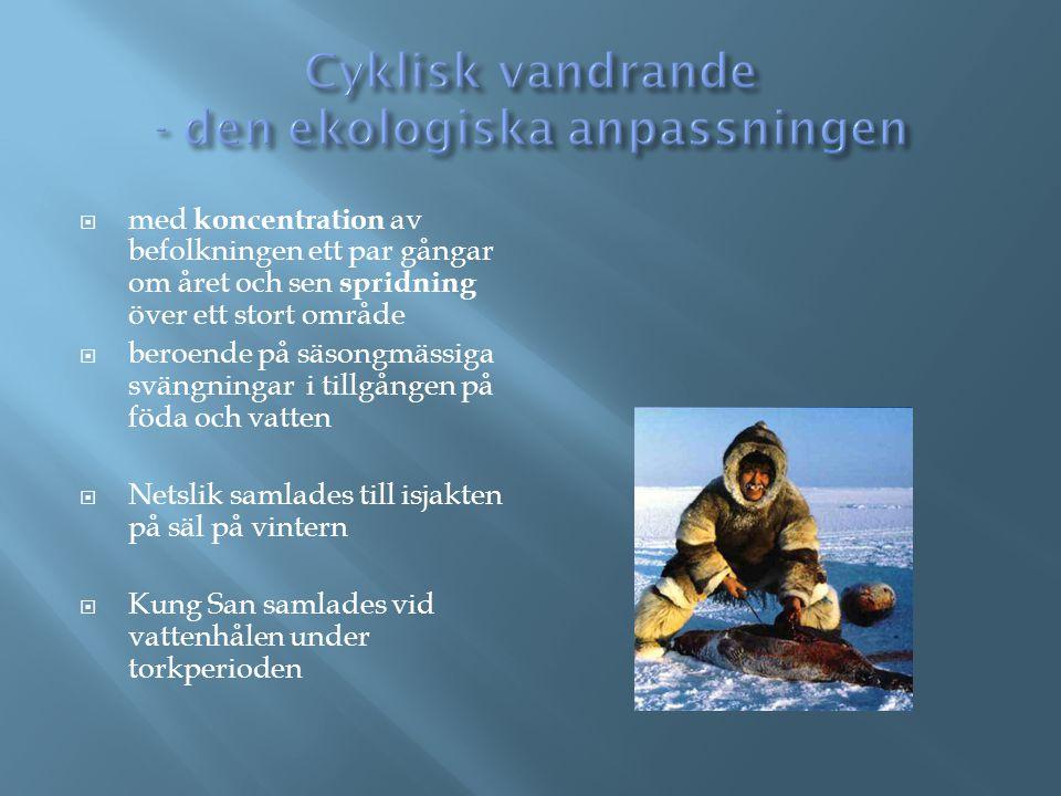 Cyklisk vandrande - den ekologiska anpassningen